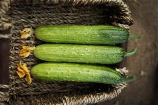 在减肥方面,旱黄瓜和水黄瓜哪个会更好?看看区别在哪