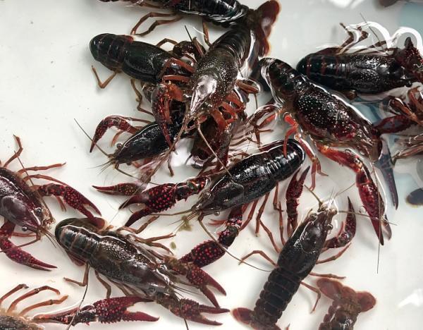 打完瘦脸针可以吃小龙虾