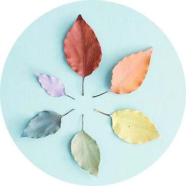 百日草花瓣颜色艳丽多彩,花型千姿百态,株型美观,花期长,拽上一朵凹图片