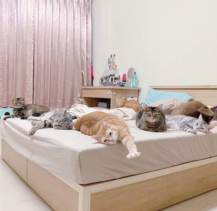 网友家橘猫能吃又节俭,每次都等别的猫吃完后去扫尾~