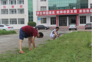 湖北襄州区黄集镇中心学校:红色党旗在飘扬 党员除草服务忙