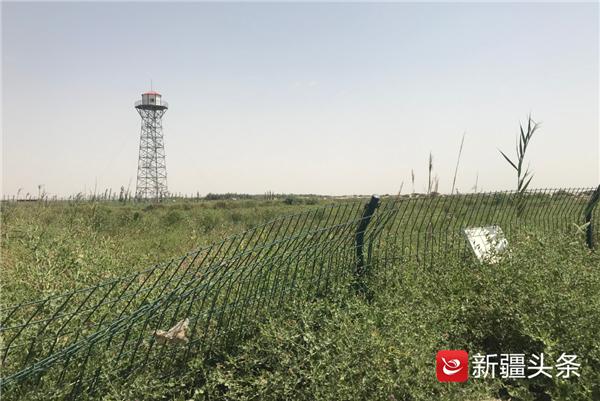 沙漠也要保护,新疆岳普湖县有块沙化土地封禁保护区