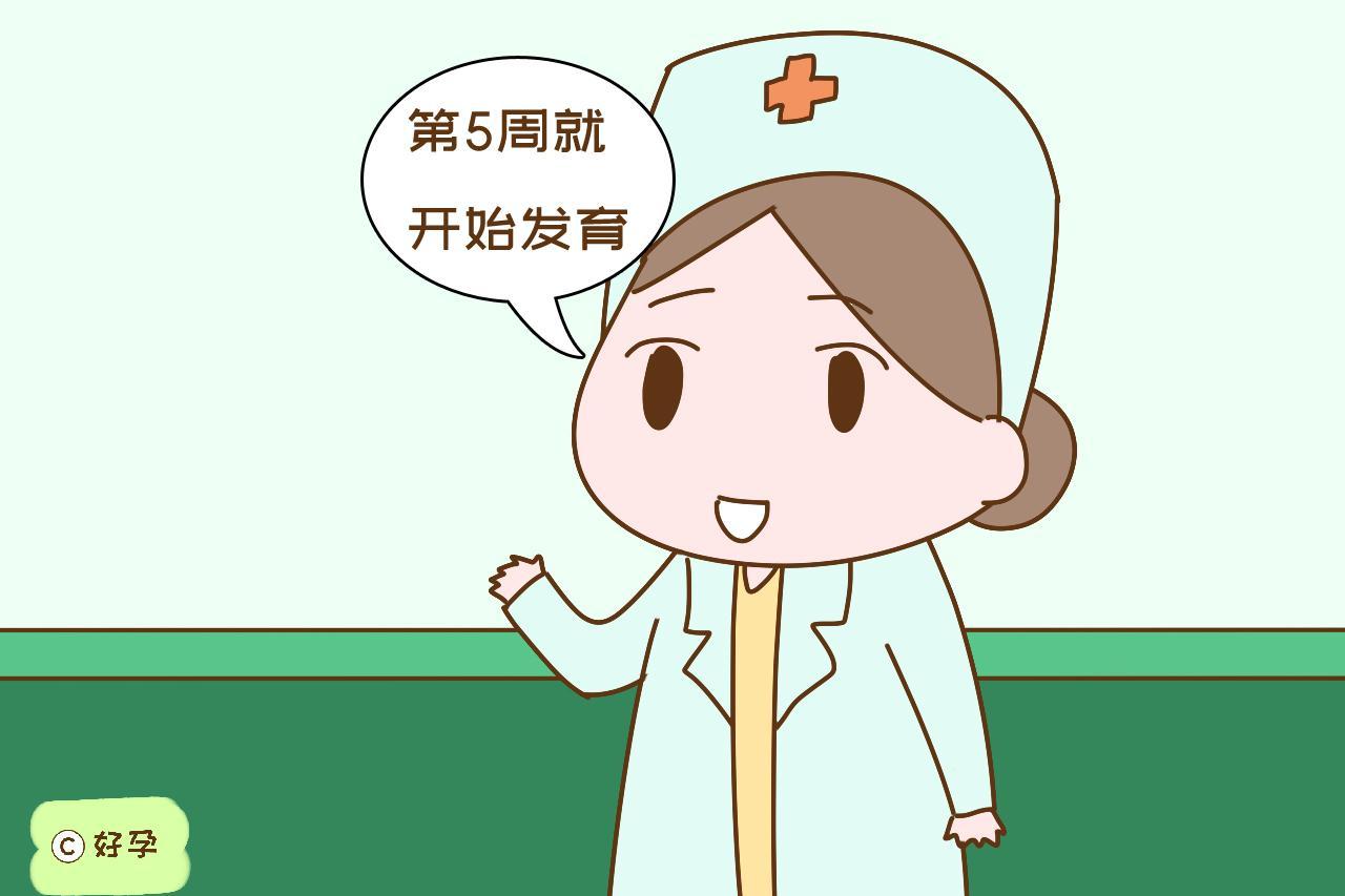 """孕期有三周是胎儿智力发展""""高峰期"""",错过难补救,孕妈别大意"""