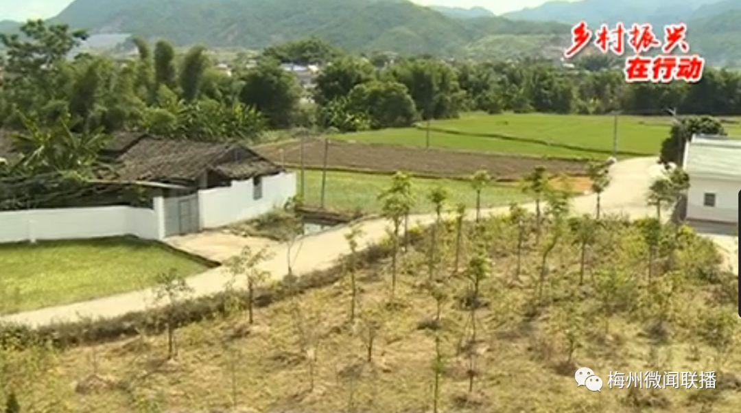 梅州这个村拆旧复垦共分得收益93