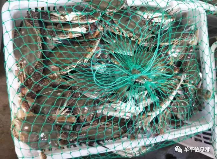 来秦皇岛不吃海鲜就走了?8月的螃蟹欢迎你再次光临