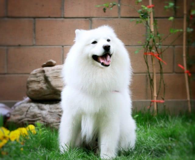 <b>来自世界各国的狗狗说的都是同一种语言吗?</b>