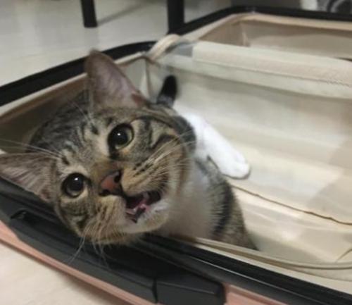 坏坏的猫咪:猫在行李箱撒尿,行李箱被猫尿了