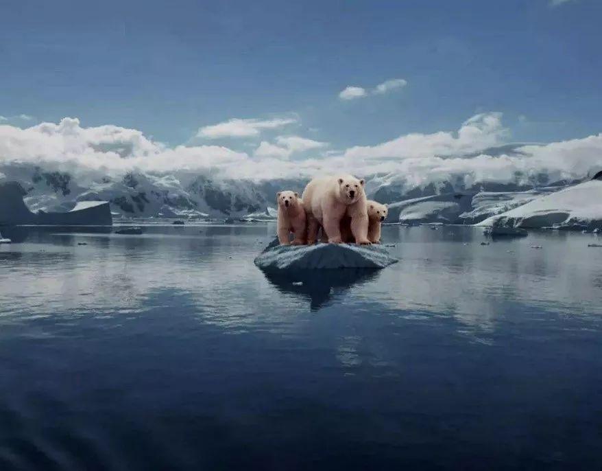 北极作文平衡,a作文珍惜高中的量改变,北极熊可无家可归.的地球消失人身边冰帽图片