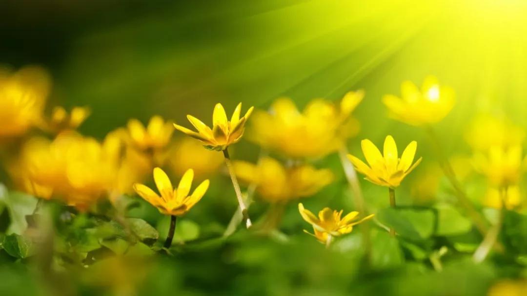 如何区分全日照、半日照、半阴、阴蔽?收好这份植物光照指南!