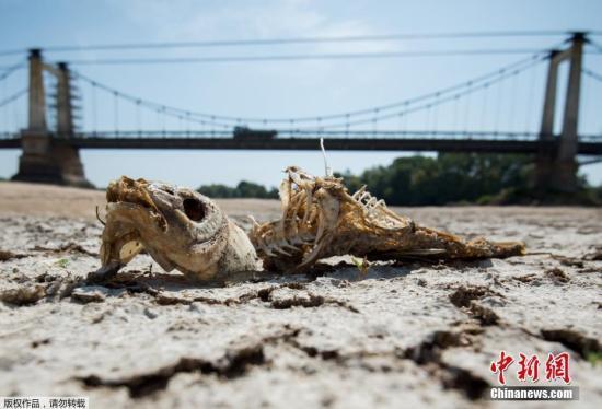 """法国面临严重干旱 38省被列为红色""""危机""""等级"""