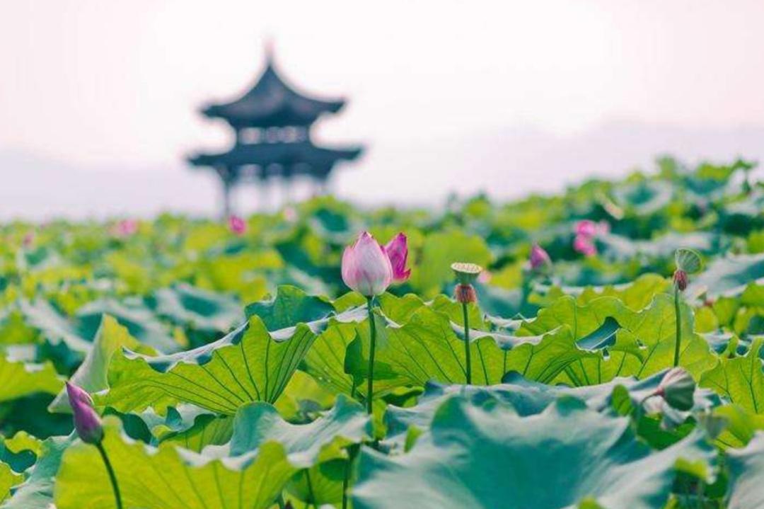 <b>那些年曾经风靡大江南北的影视剧,原来都在杭州取过景</b>
