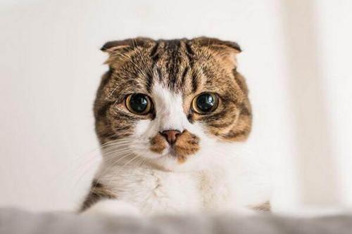 <b>【奇妙の猫咪物语】猫咪眼睛毛变硬了,小猫眼睛流泪周围毛硬硬的</b>