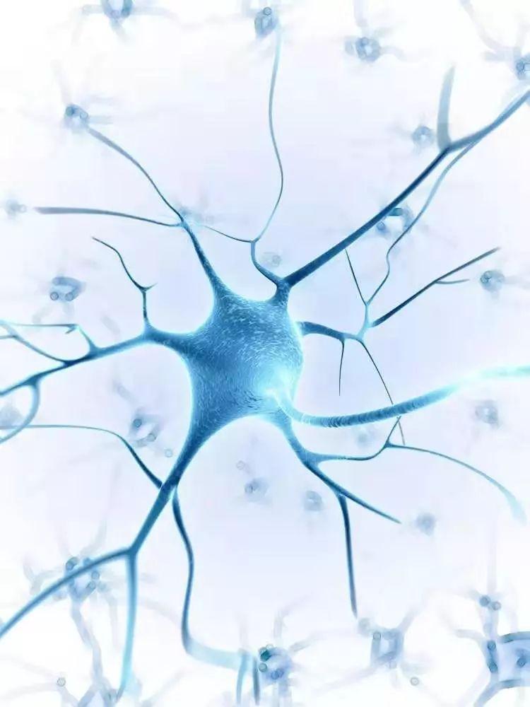 认知障碍与大脑病理改变并没有必然联系