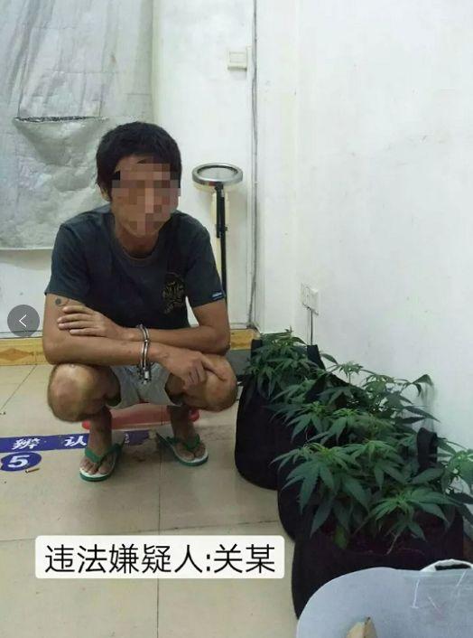男子网购大麻种子在家里种植,还有吸食大麻工具…警方:抓你没商量!