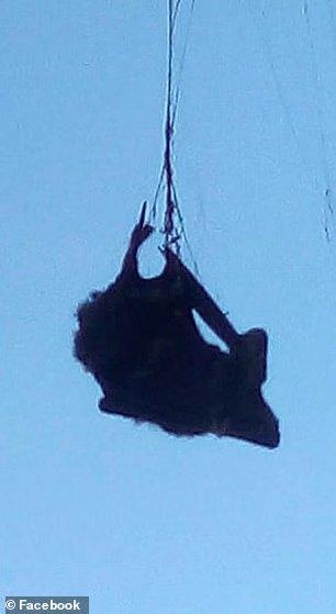 """什么恐怖片比较恐怖_巨型蜘蛛猎杀蝙蝠,得州农场恐怖大片:""""蜘蛛侠""""吃掉""""蝙蝠 ..."""