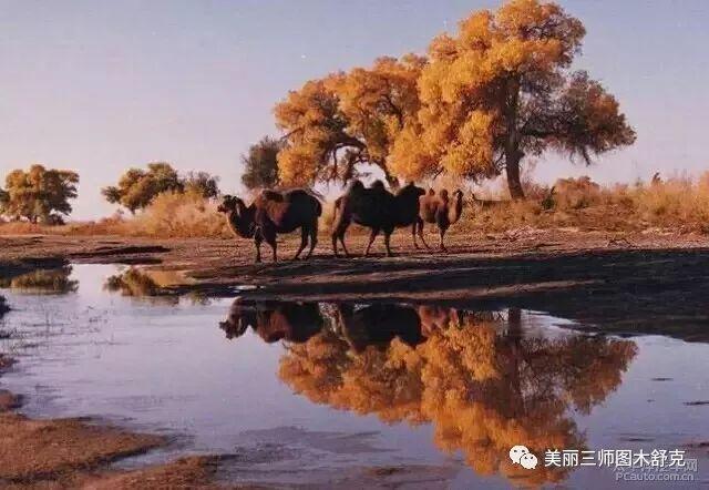 【最美家乡】88秒就爱上新疆!
