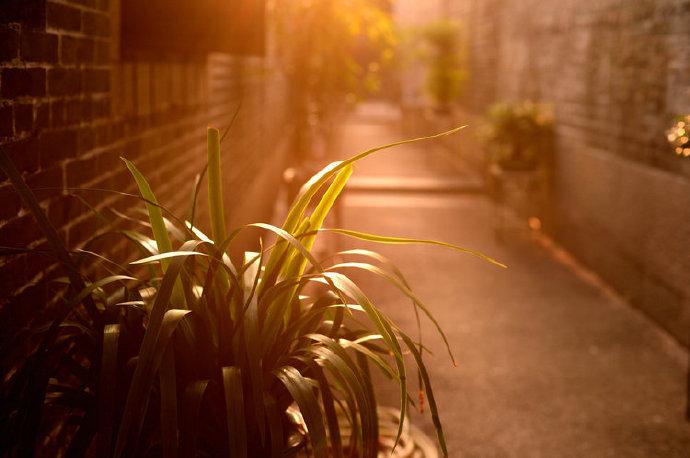 美好的事物总能治愈人心:行走在风景中,人间三千事,皆付笑谈中