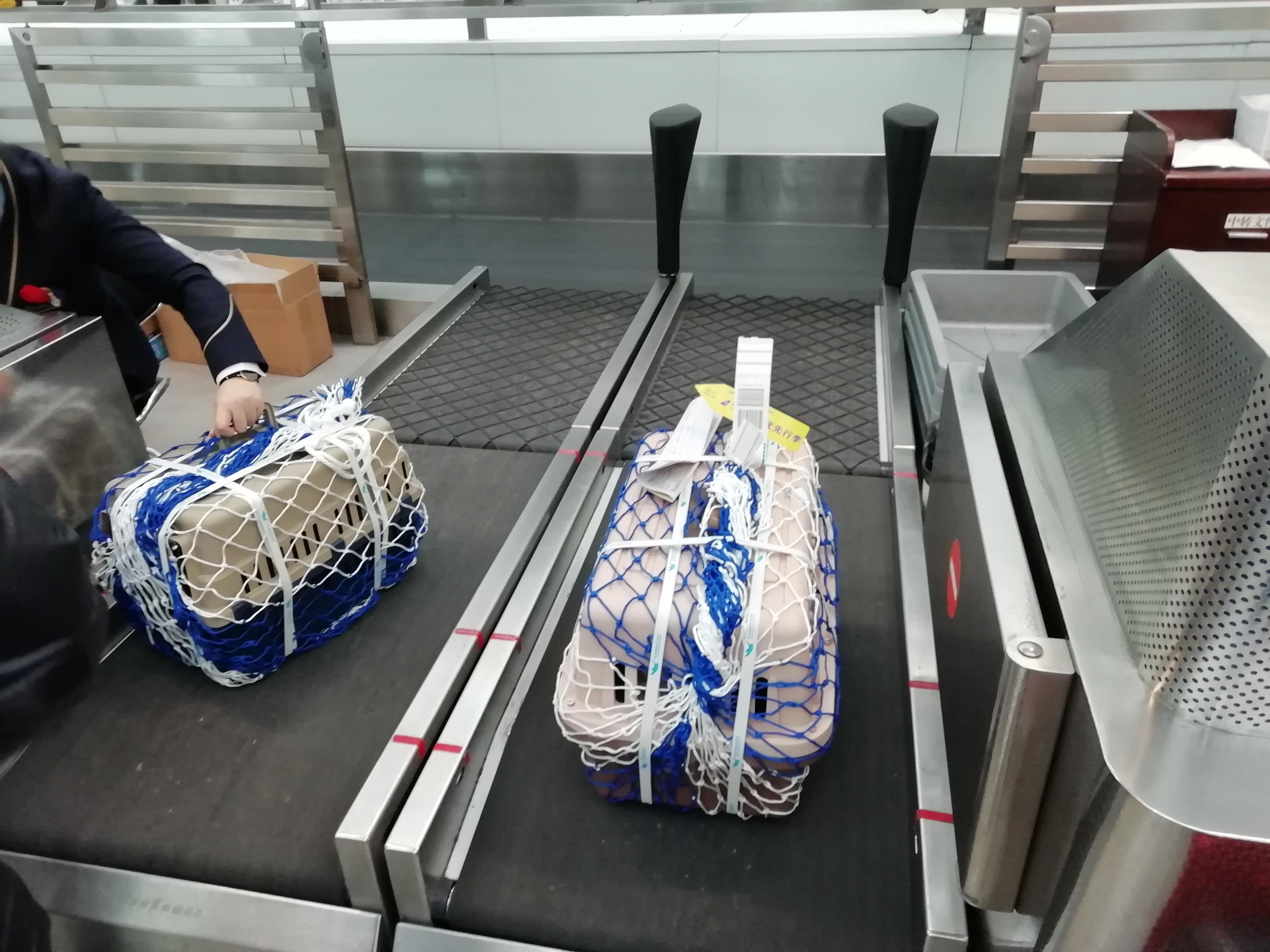 广州宠物托运前要做哪些事前准备?