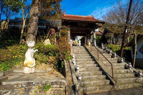 没有猫,世界会毁灭!日本这家拥有600只猫的寺庙语出惊人!