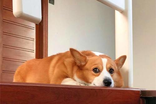 【养宠经验分享】狗狗的毛比较干糙是什么原因