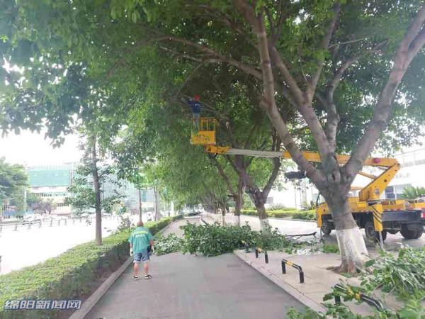 绵阳城区绿化树两天大雨倒伏