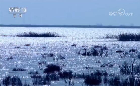 黄河道域生态恢复成效明显