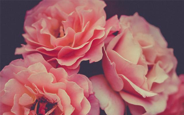 8月底,桃花芳香十里,真爱降临,幸福翩翩而来的星座