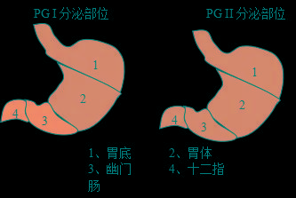 胃蛋白酶原检测 胃蛋白酶原在胃癌筛查中的价值都有哪些?