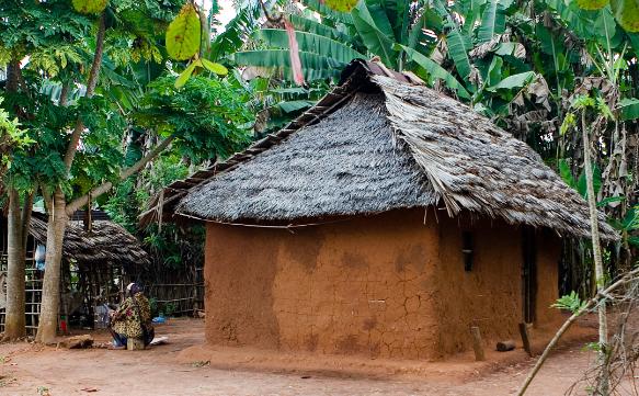 酷似喷鼻蕉树却不结喷鼻蕉:赡养1500万非洲人,看完制造过程你敢吃吗