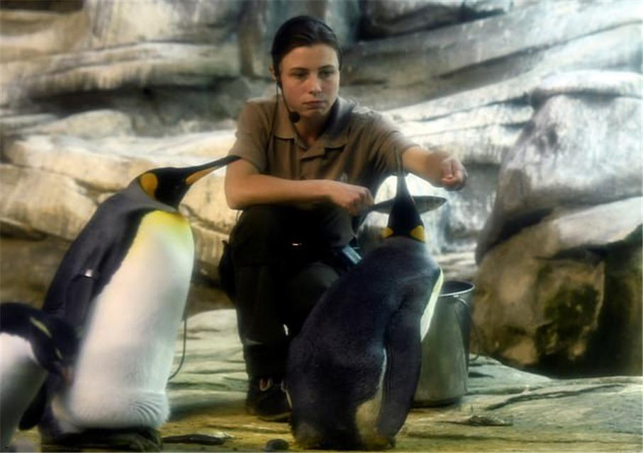 原创 惊喜!德国同性恋企鹅喜获被遗弃的蛋,有望实现当爹梦想