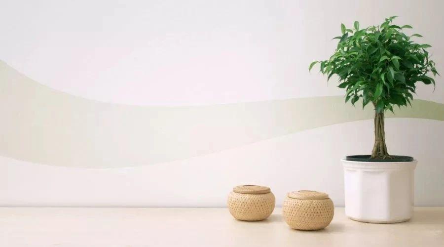 卫生间不用管也长得很好的8种植物,懒人也能养很好_不用管的植物