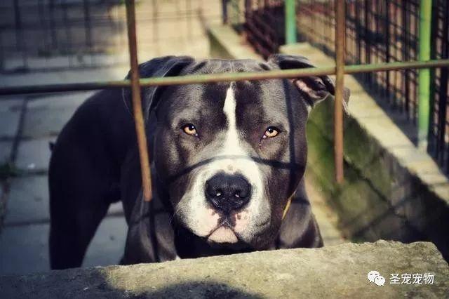 美国少年凌晨闯入私宅,不料守候在此的3条狗要了他的命