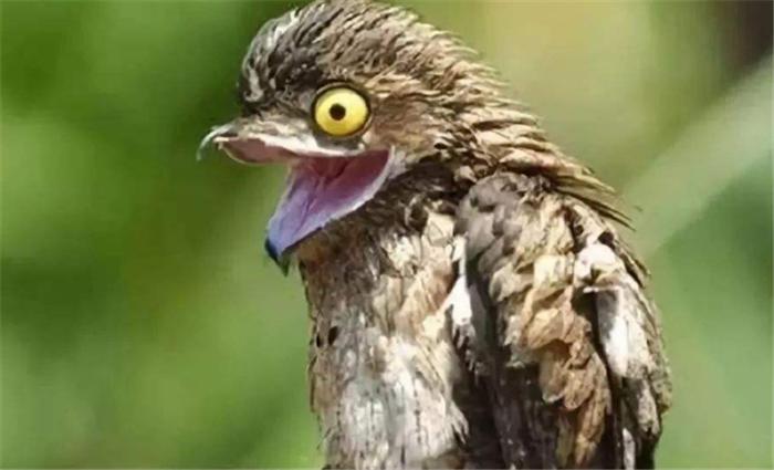 """世界上""""最辛酸""""的鸟,一出生就伪装成树,避免被打扰"""