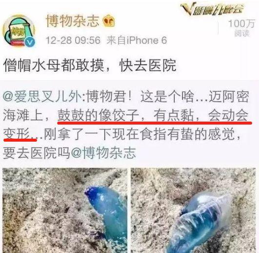 """<b>马鞍山人在海边如果看到这种""""塑料袋"""",立刻跑!千万别犹豫!</b>"""