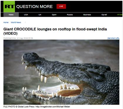"""鳄鱼在屋顶""""晒太阳""""?洪水后男子家中迎来""""不速之客"""""""