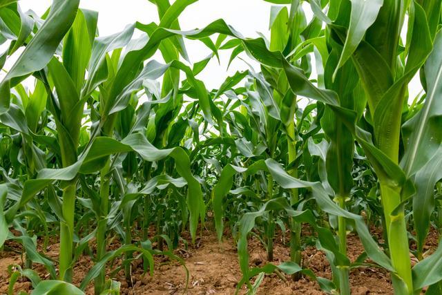 """<b>""""利奇马""""致农作物受灾20.63万亩 损失3542.6万元</b>"""