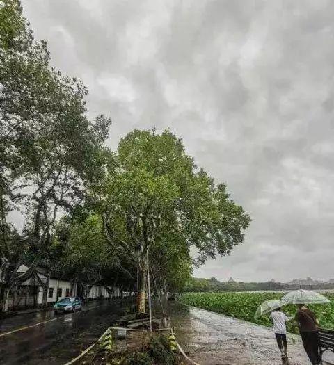 台风过境,养殖户坐以待毙,靠天吃饭?池塘管好不怕台风一样高产