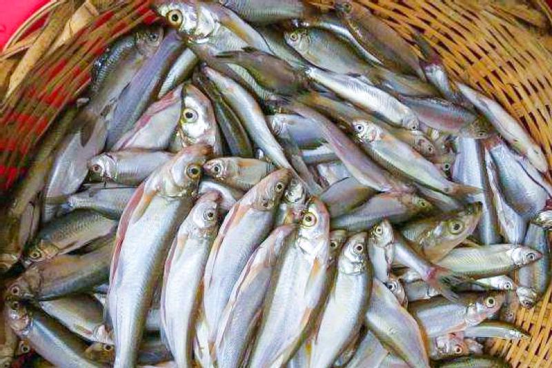 """农村一般吃的那几种鱼【7种农村河里""""最好吃""""的鱼,一般人看不上,殊"""