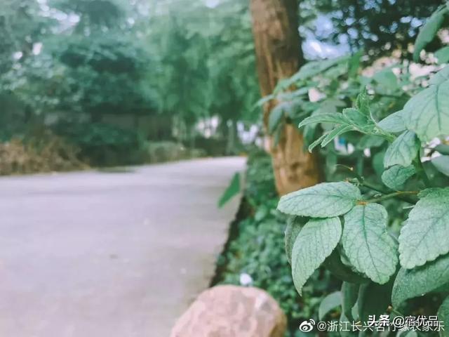 """长兴被称""""上海的后花园"""",450多户农家乐爆满,为何都要来此?"""