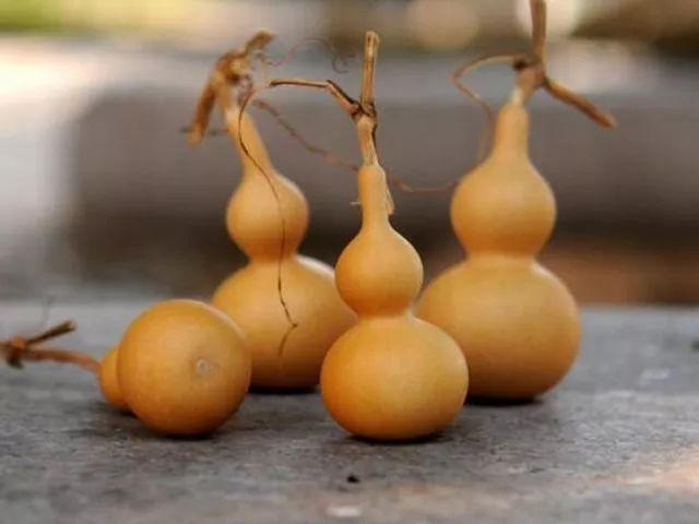 想要文玩葫芦拥有好品相,必先掌握这10条保养技巧! 文玩葫芦