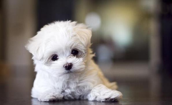 普贝斯:穷养宠物是要有底线的