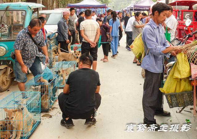 原创 空空荡荡,赶场天来从江下江卖小猪的集市,却一只小猪崽都没看到