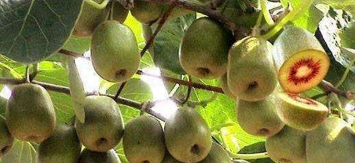 立秋后,别只会吃桃子苹果,秋天最该吃这水果,酸甜可口、维C高_苹果和