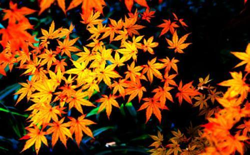 """入秋后要吃果,坚果、茄果、水果一样也不能少,帮你克服""""秋燥"""" 有茄"""
