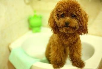 普贝斯:最适合女生养的5种狗