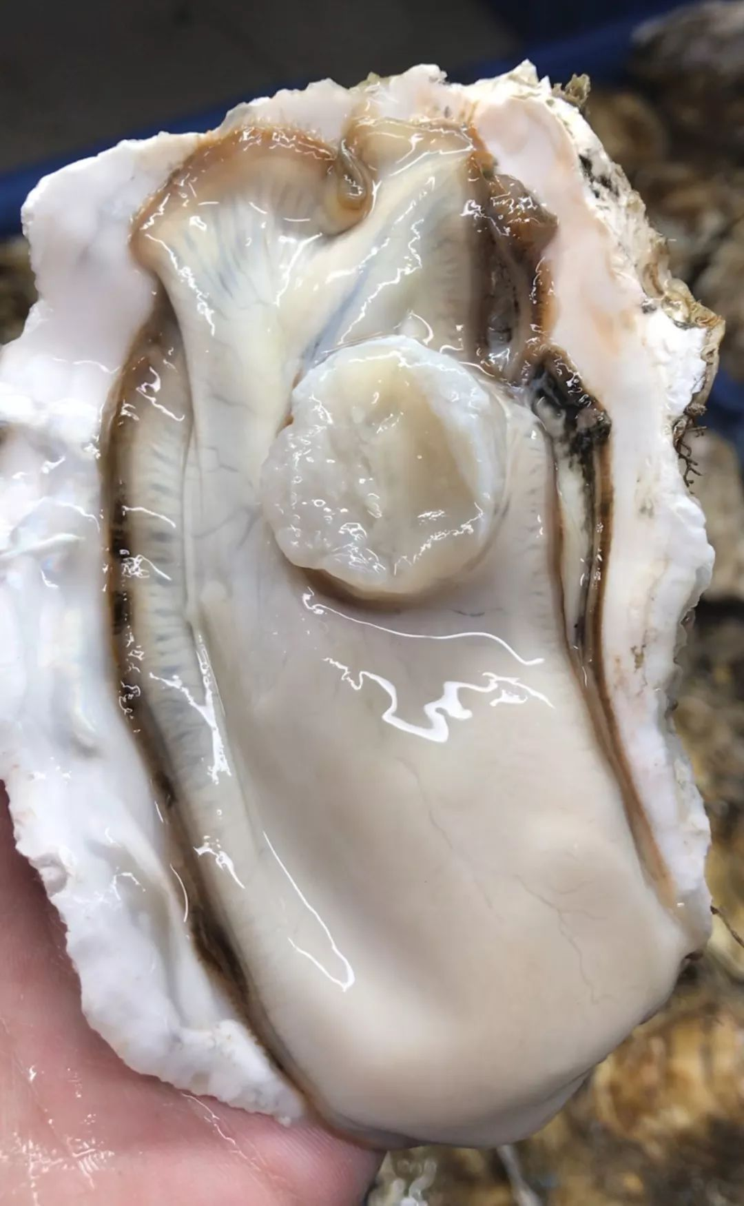 97就撸_小串一撸就是一大把,麻辣小龙虾,麻辣扇贝,腌花螺.吃啥有啥!