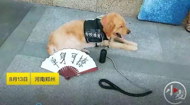 【郑事儿】郑州一单身青年通过狗子找对象,却不如狗受欢迎