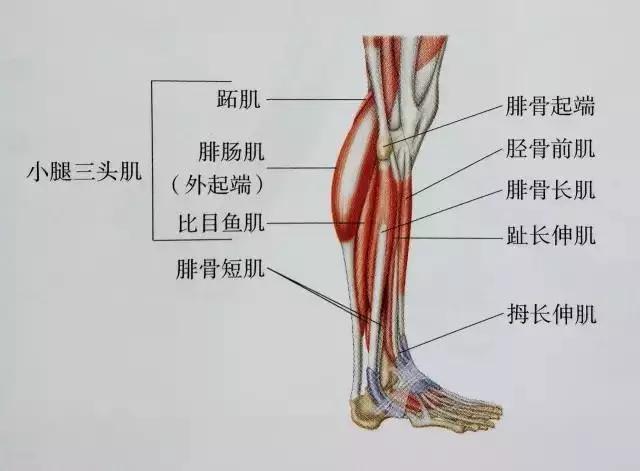 肌肉紧张显小腿粗?小腿拉伸图解告别疙瘩腿