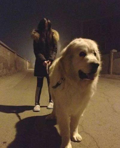 半夜遛狗影响运势?诸多狗狗神秘学禁忌你知道多少