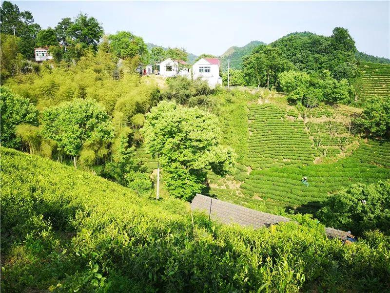 金寨画一幅不褪色的乡村美景
